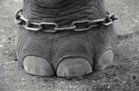 Cuento con moraleja: El elefante encadenado