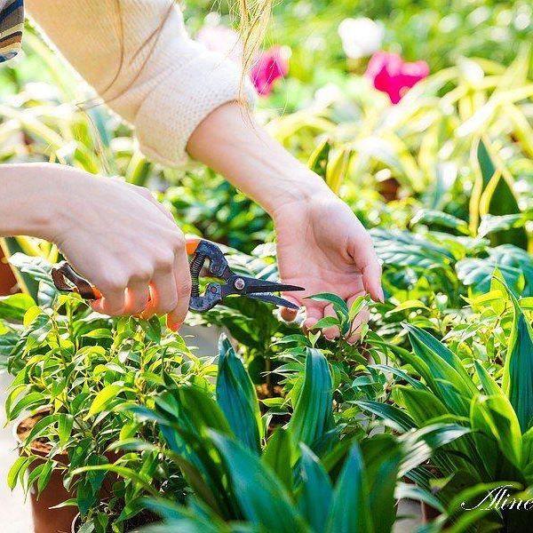 Fazendo uma analogia com as ervas daninhas, Aline Bringel te mostra a importância de se entender a própria natureza para a identificação dos valores fundamentais que regem a sua vida. Acesse o blog e descubra. http://www.alinebringel.com.br/blog-oficial