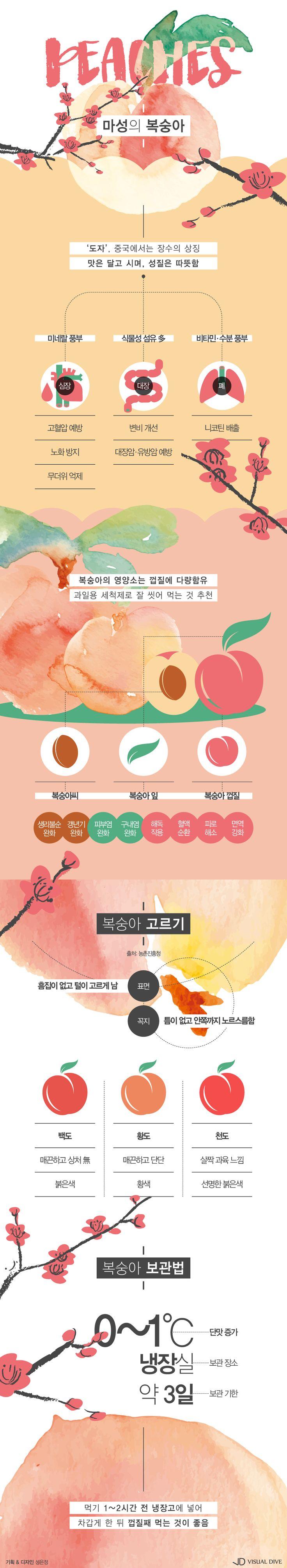 """""""먹으면서 양보하세요"""" 복숭아, 가을철 피부 건강 1등 공신 [인포그래픽] #peach / #Infographic ⓒ 비주얼다이브 무단…"""