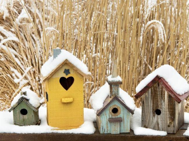 5 условий красоты зимнего сада - Портал «Домашний»