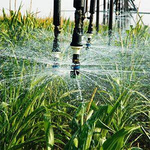 Una alta intensidad de aplicación del agua de riego descompone la estructura del suelo y altera su composición, creando un efecto de sellado en la superficie e impidiendo que las futuras aplicaciones de agua penetren apropiadamente. El resultado es la acumulación de agua superficial y la generación de escorrentías que arrastran parte del suelo.