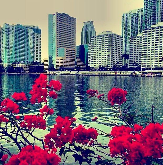 254 Best Bienvenidos A Miami Images On Pinterest South