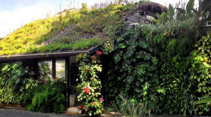 Çevre Dostu Yeşil Çatılar