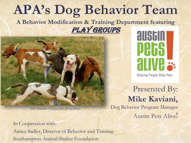 Apa S Dog Behavior Team A Behavior Modification Training Department Featuring Play Groups Presented By Mike Kaviani Do Dog Behavior Dogs Behavior