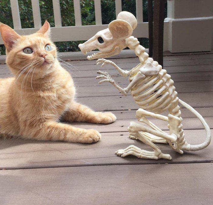 смешные приколы над кошками смотреть картинки
