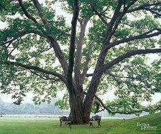 The Best Shade Trees for Your Yard                                                                                                                                                                                 More