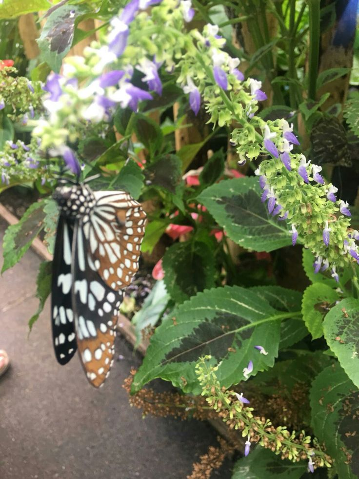 Butterfly house Lancaster .Uk. Butterfly house, Nature