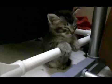 Pequeño Gatito soñoliento.