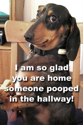 I am so glad you are home. Someone pooped in the hallway.