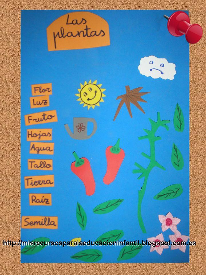 Las partes de una planta (Castellano y Catalán) ideas para el aula