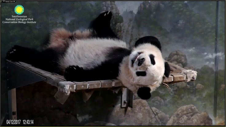 Smile :) Bei Bei your on Panda Cam