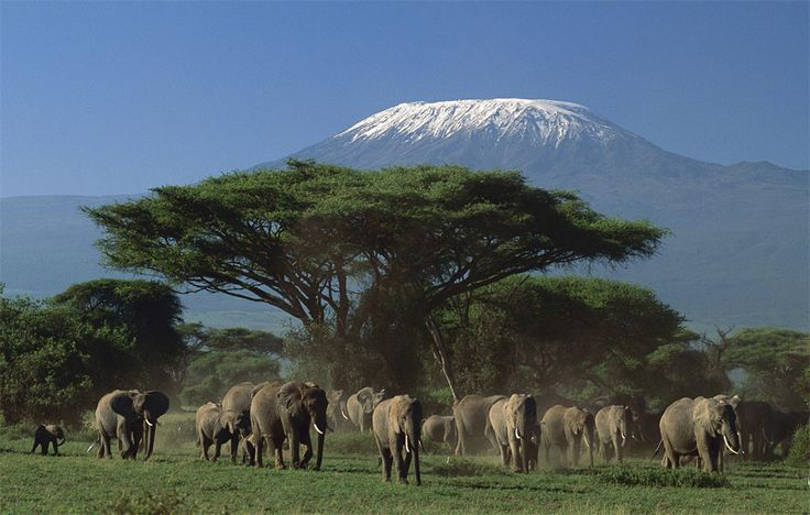 Le Kilimandjaro (Tanzanie)