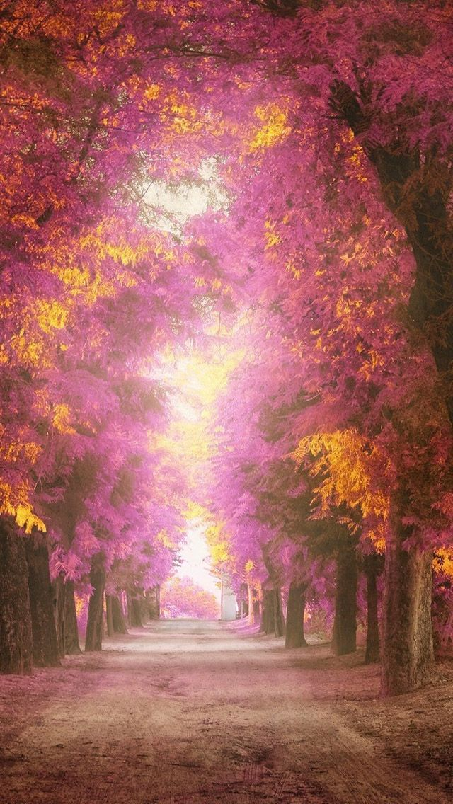 Pink park #iPhone #5s #Wallpaper