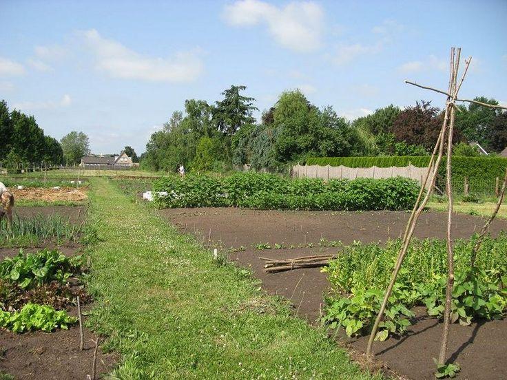 De buurtmoestuin aan de Middenlaan in 2e Exloërmond heeft het druk. De ruim 1200 vierkante meter groente wordt beheerd door een groep bewoners. Er is een gemeenschappelijk teeltplan voor groenten, bloemen en kruiden.  Lees verder op onze website.