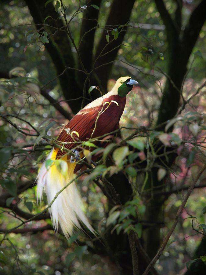 Rare Birds Of Paradise 50 best Birds o...