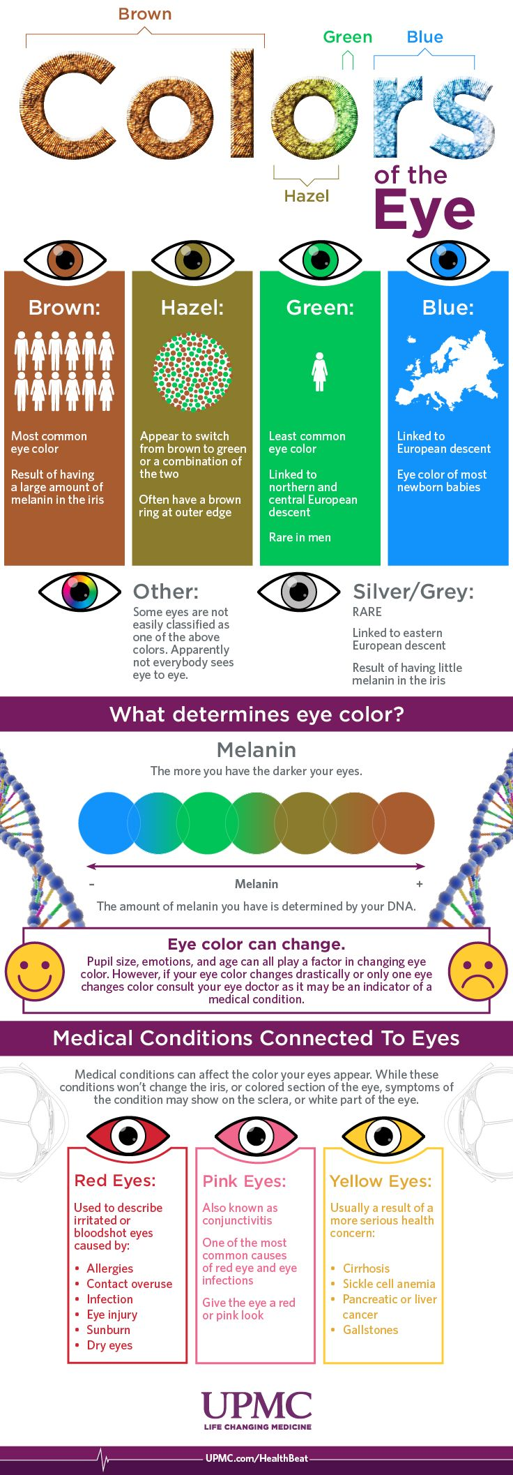Infographic: Eye Color Breakdown Guide – Banu Urnc