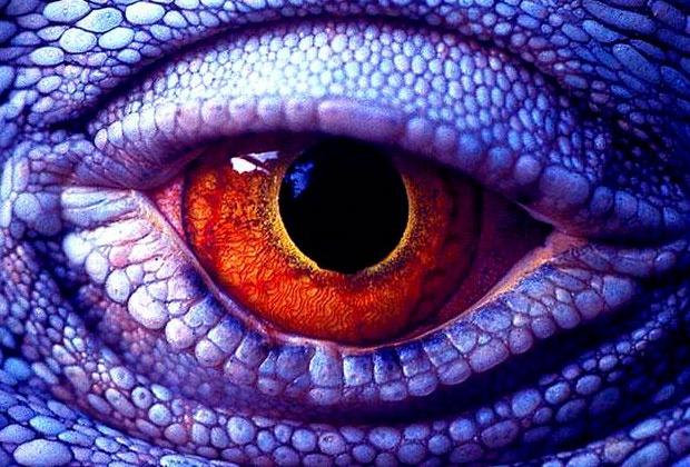 Surrealistically real macro shot of a lizard's eye.