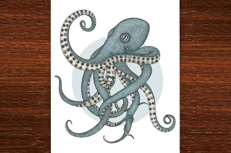 The Octopus has Eyes