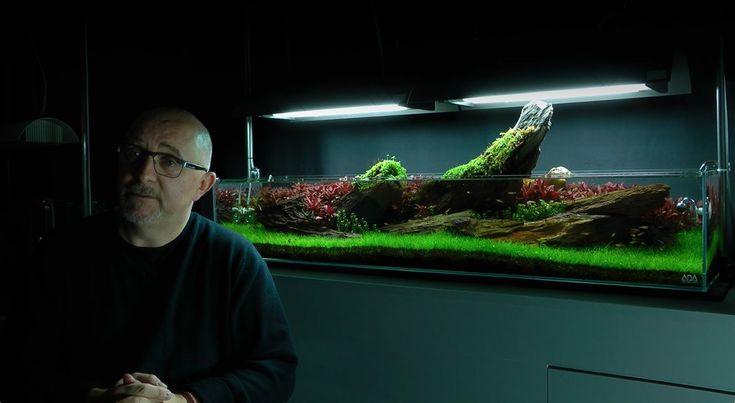 James Findley Interview on Crimson Sky Aquascape | planted aquarium | Pinterest | Aquarium, Planted aquarium and Vivarium
