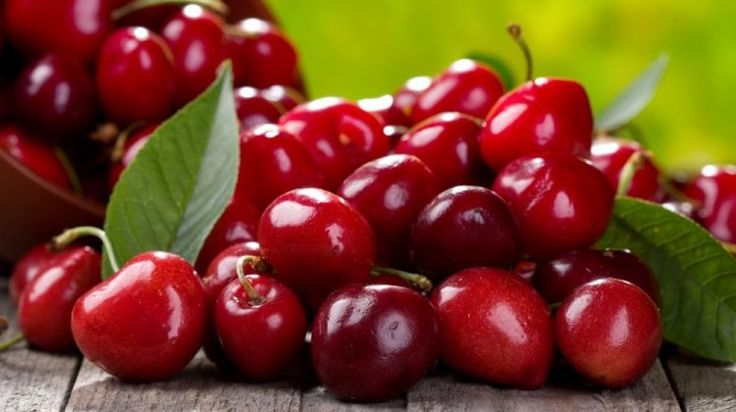 Growing Cherry Trees From Seeds -Wouldn't you want to just pick and bring in a bowl of beautiful cherries from your very own tree? Scroll on for a Garden Season guide in growing cherry trees from seeds!