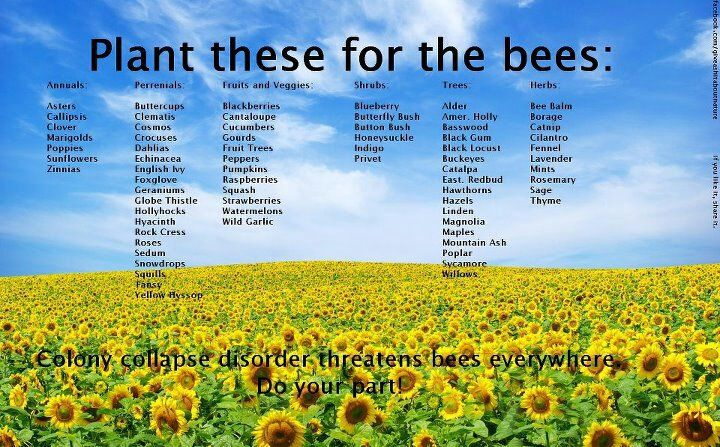 Plant these for the bees!Gardens Ideas, Google Search, Beautiful Landscapes, Plants, Flower Gardens, Bumble Bees, Flowersgarden, Landscapes Photography, Landscapes Pictures