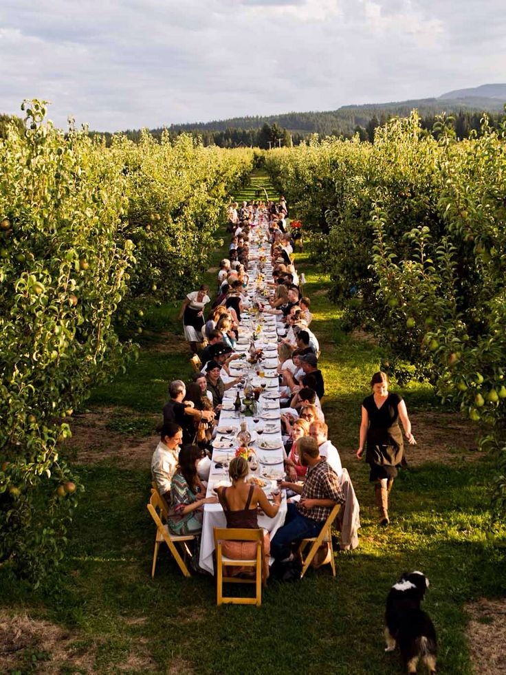 summer spring entertaining for birthday wedding reception party: long table garden party lunch in the vineyards winery fruit orchard farm (r)