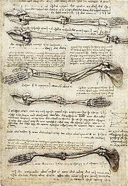 STUDI DI ANATOMIA: Movimento del braccio