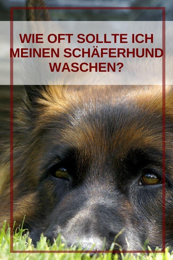 Hund Baden Wie Oft Hunde Hundebaby Hunde Babys