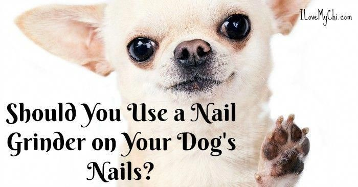 Puppy Care Tips Essential Oils Puppycare101 Dog Nails Pet