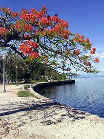 A ilha de Paquetá é um bairro do Rio de Janeiro que conta com quarenta ruas, doze praças, dois parques públicos e nenhum carro. Sim, por lá é proibida a circulação de veículos motorizados. Para chegar basta pegar a barca na Praça XV, no centro do Rio de Janeiro.