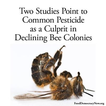 The use of pesticides known as neonicotinoids are killing bees. Share this and help us end the decline of our much needed pollinators here: http://www.nytimes.com/2012/03/30/science/neocotinoid-pesticides-play-a-role-in-bees-decline-2-studies-find.html