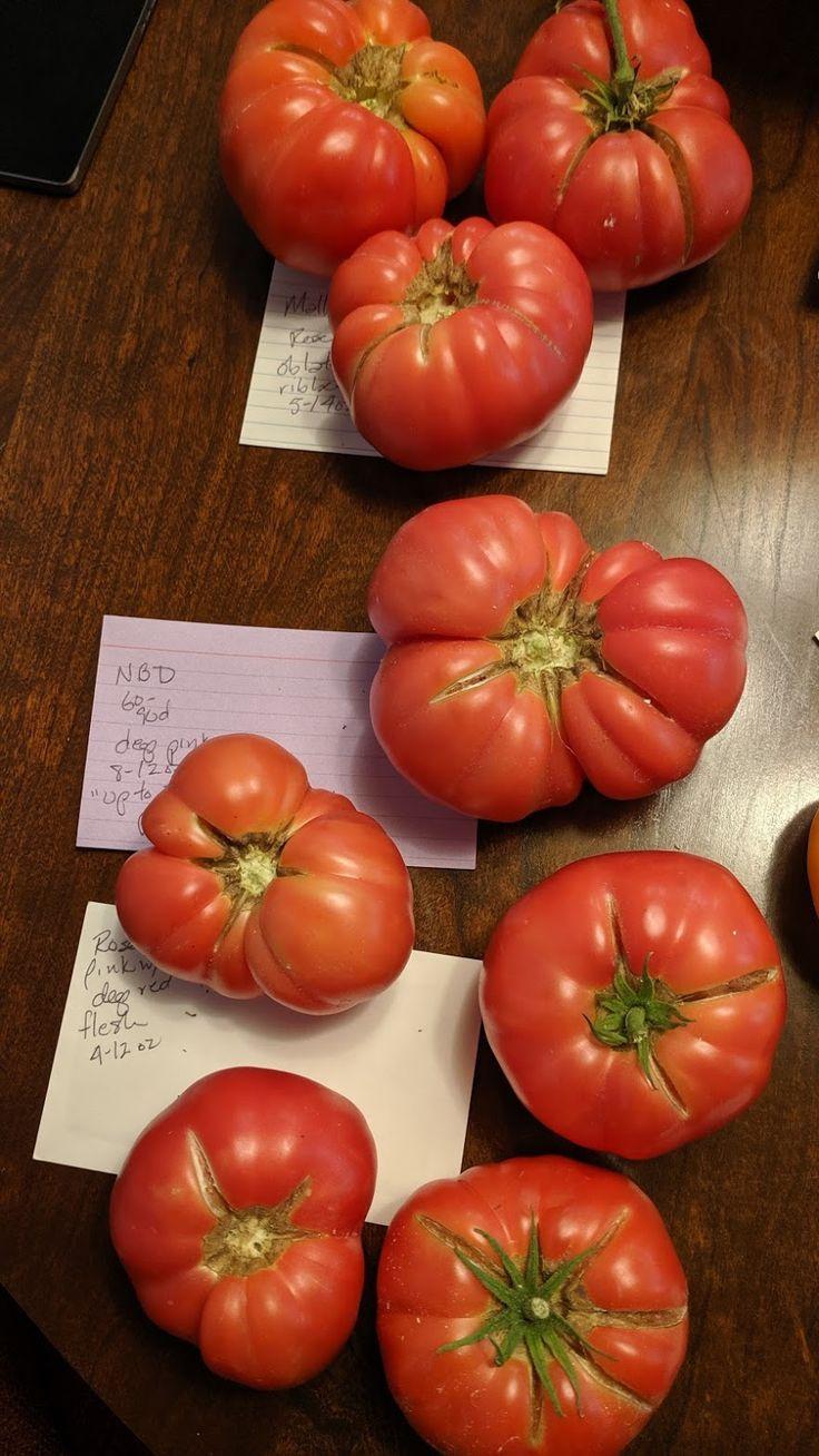Photo In Dwarf Tomatoes 2019 Google Photos Tomato 400 x 300