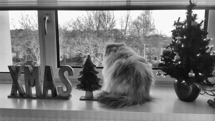 Waiting for Santa #kerst