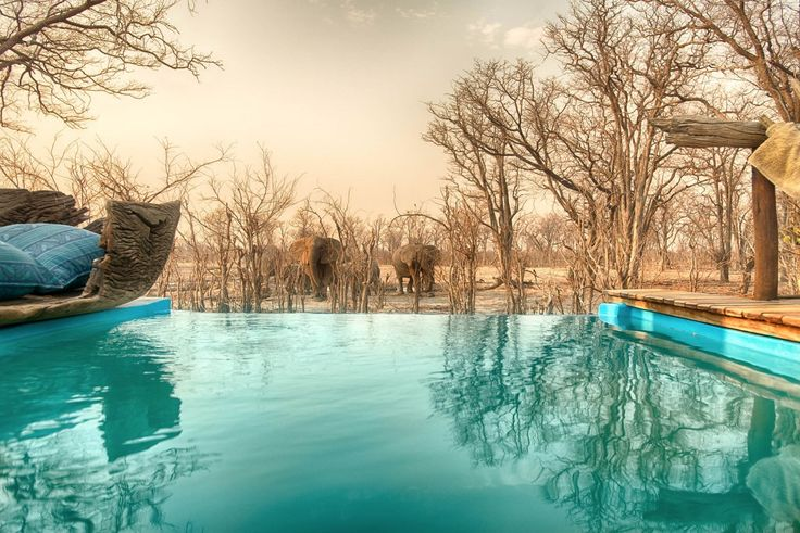 Like a magical scene from another world!  #Botswana #safari #safarilodge #Elephants #BigFive