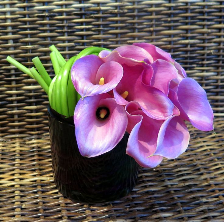 A sweet, pretty cluster of pink calla