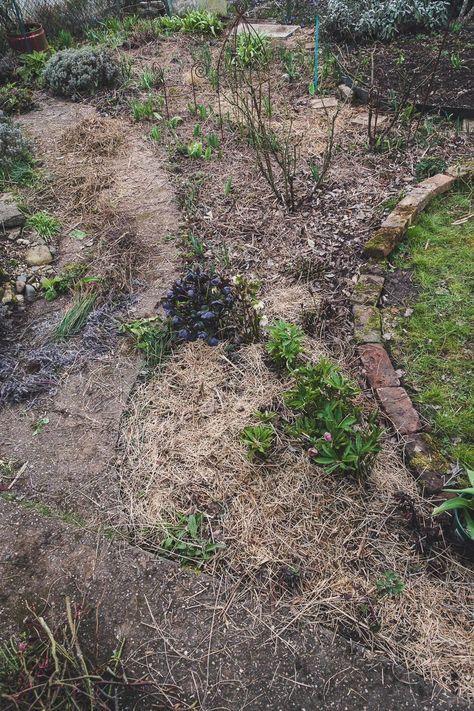 Richtig mulchen im Garten Karin Labrenz
