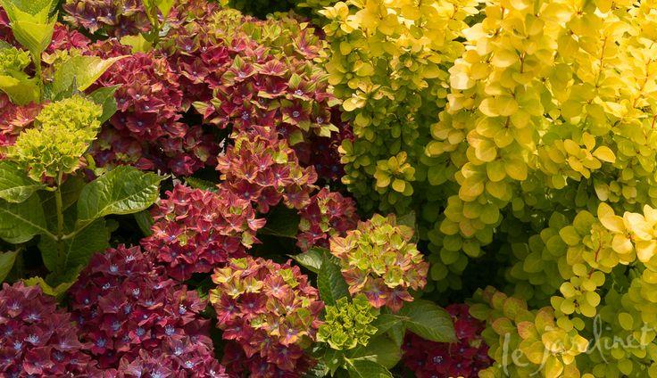 Hydrangea Companion Planting Companion Gardening