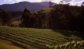 Tilba Valley Wines is magnificently situated on the shores of Lake Corunna under the foothills of Gulaga/Mt Dromedary and just a few minutes drive from Central Tilba and about ten minutes from the holiday resort of Narooma