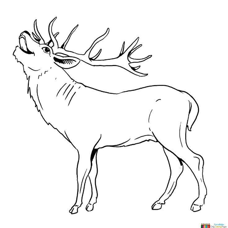 41 best Deer images on Pinterest | Reh, Zeichnen und Hirsche