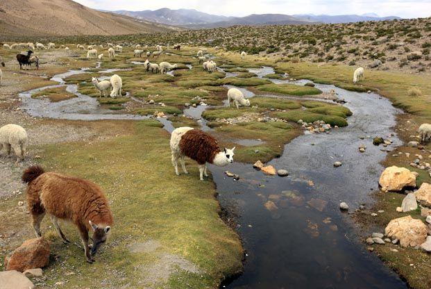 Trek Pérou - Machu Picchu, Colca, Ausangate - La Balaguère