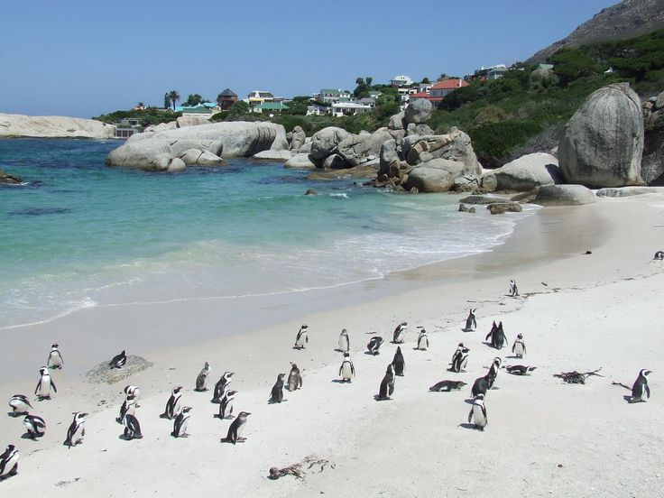 Visit Boulders Beach in Simonstown to view the penguins in their natural habitat or lounge on the beach. A 'must' for children.