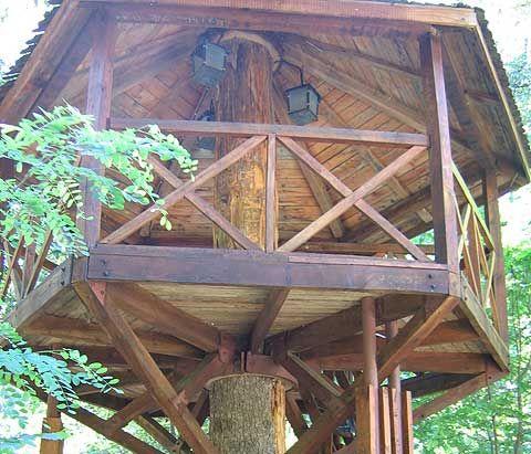 Best Tree House Ideas Images On Pinterest Tree House Plans