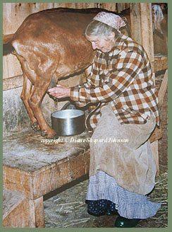 Tasha Tudor milking a goat