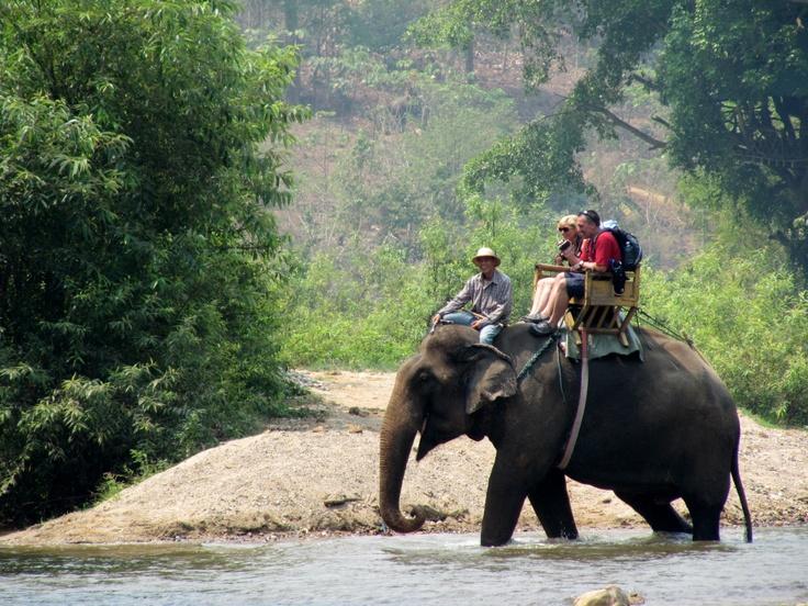 traverse éléphant <3