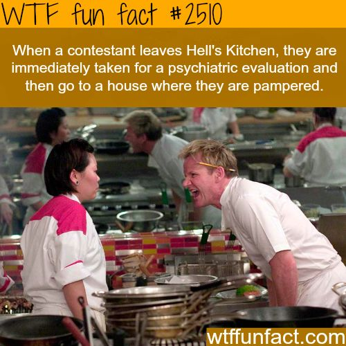 Hell's Kitchen Contestants -WTF funfacts