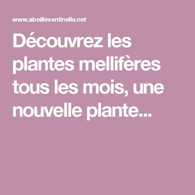 Découvrez les  plantes mellifères  tous les mois, une nouvelle plante...