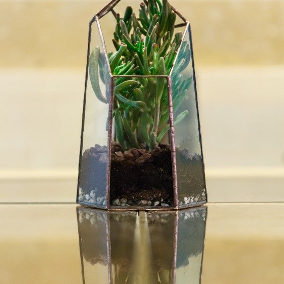 Terariu vitraliu - Niscaiva