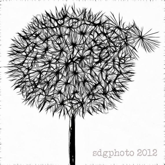 Black Dandelion on White 8 x 8 Square Print Botanical by sdgphoto, $30.00