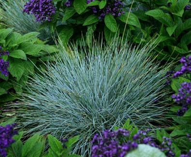 149 best images about garden grasses ornamental on for Spiky ornamental grass