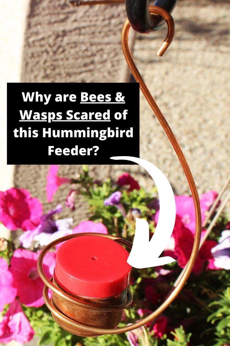 Bee & Wasp Proof Copper Hummingbird Feeder in 2020